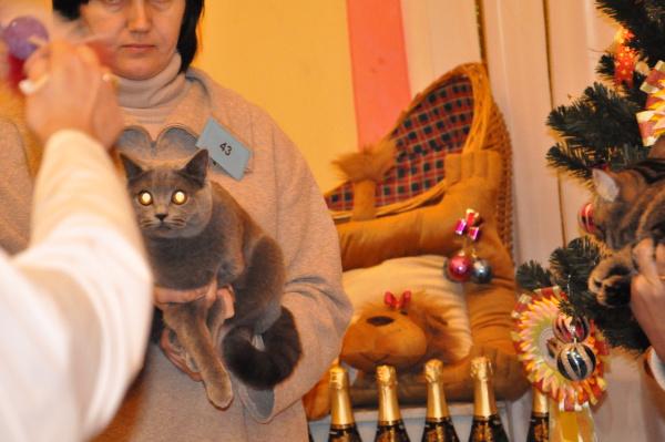 даниэль котик